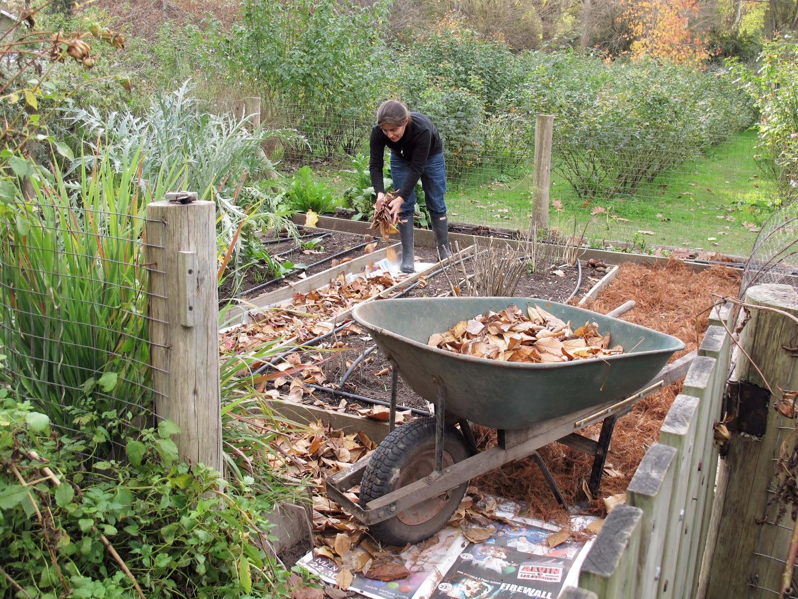 mulch a huerta 1