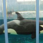 Espectáculos con cetáceos: ya no tan cautivantes